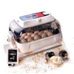 Broedmachine| Kippen houden