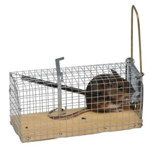 Muizen vangkooi | Kippen houden