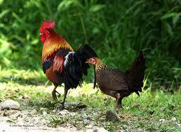 Geschiedenis kippen houden