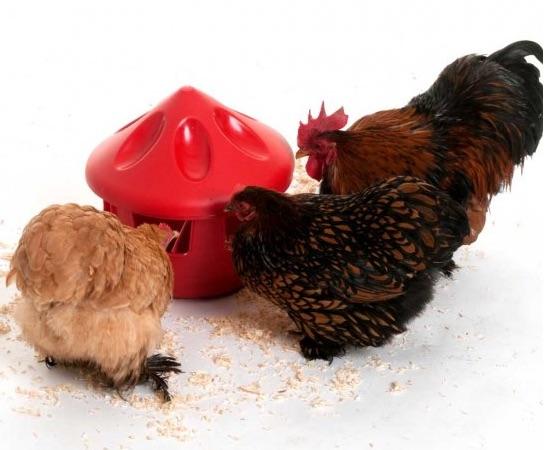 Voerbak en drinkbak   Kippen houden